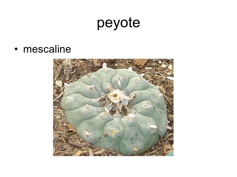 peyote mescaline