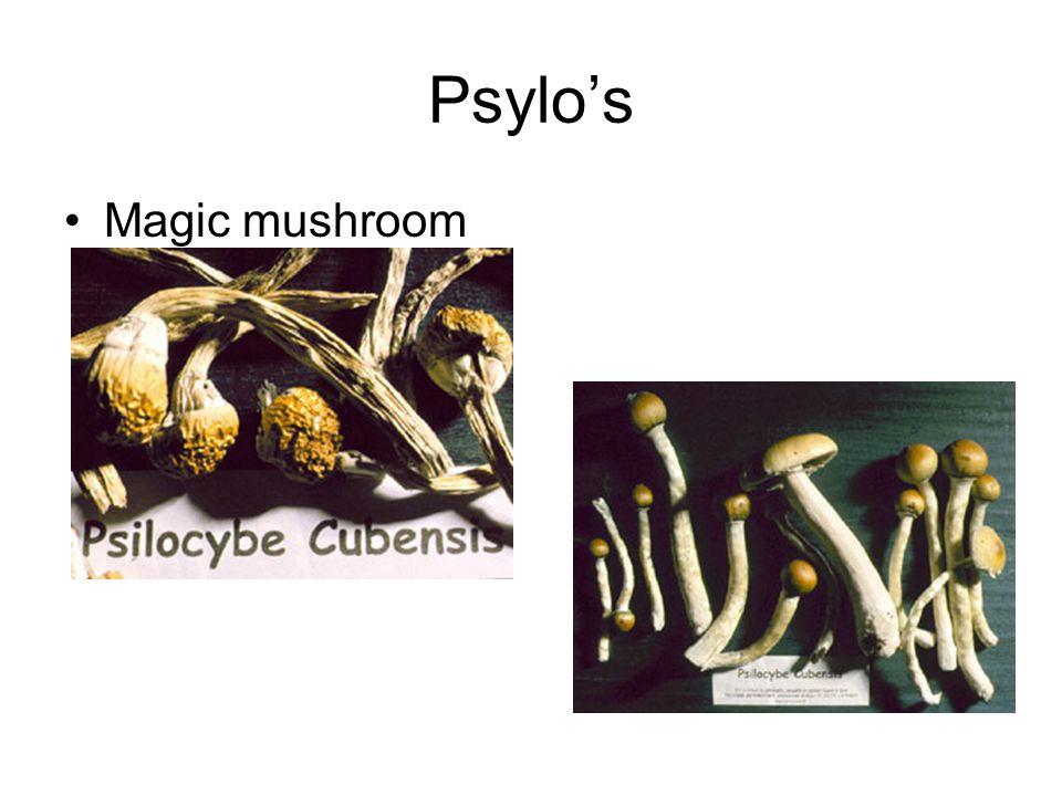Psylo's Magic mushroom