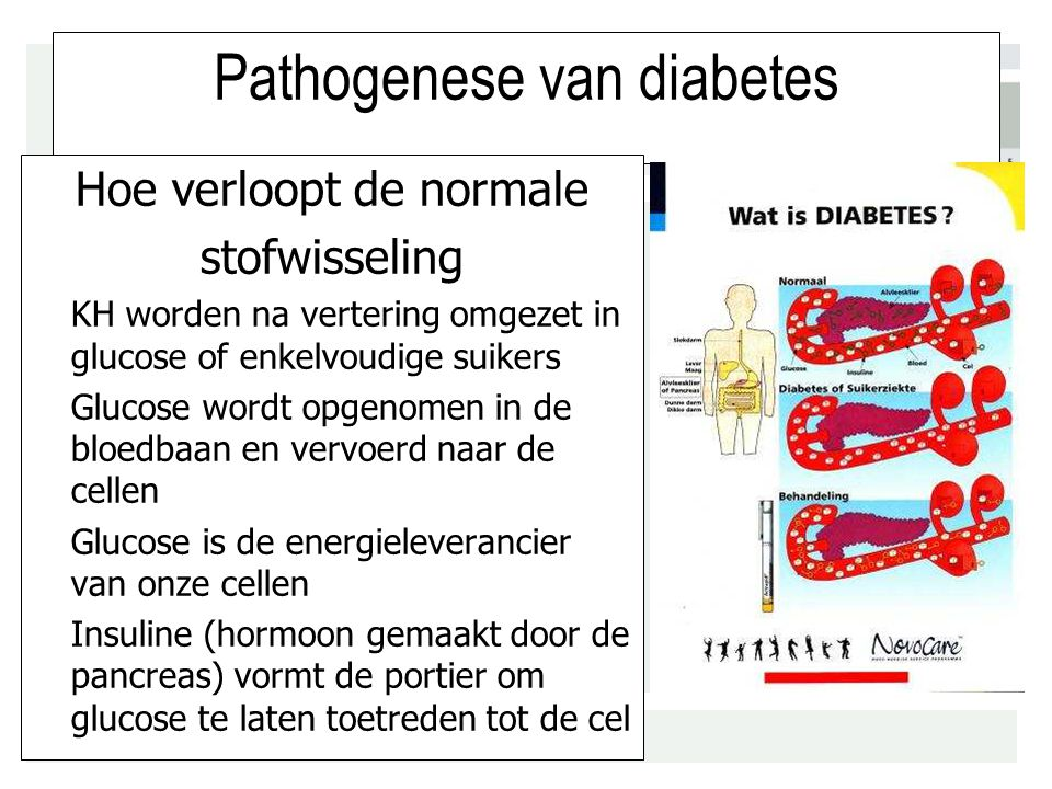 Pathogenese van diabetes
