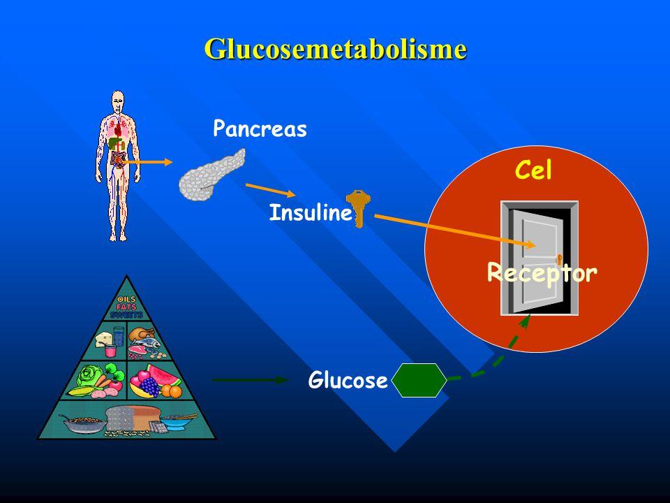 Glucosemetabolisme Insuline Pancreas Cel Receptor Glucose
