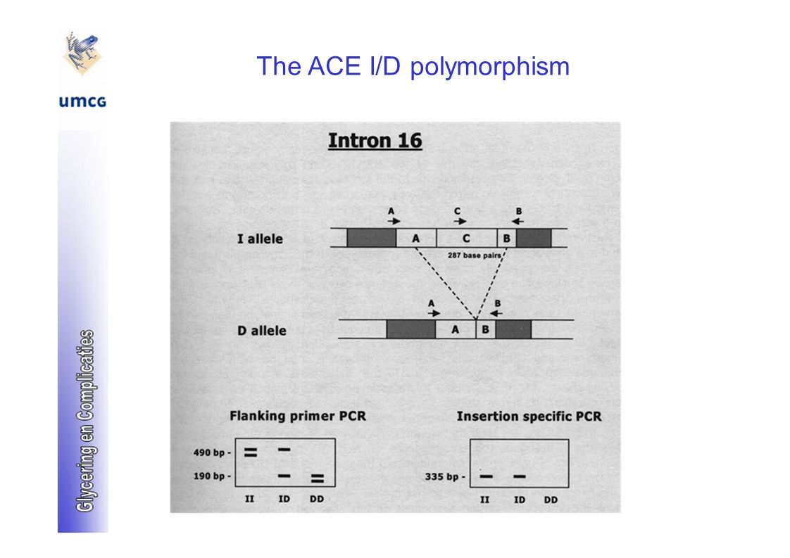 The ACE I/D polymorphism