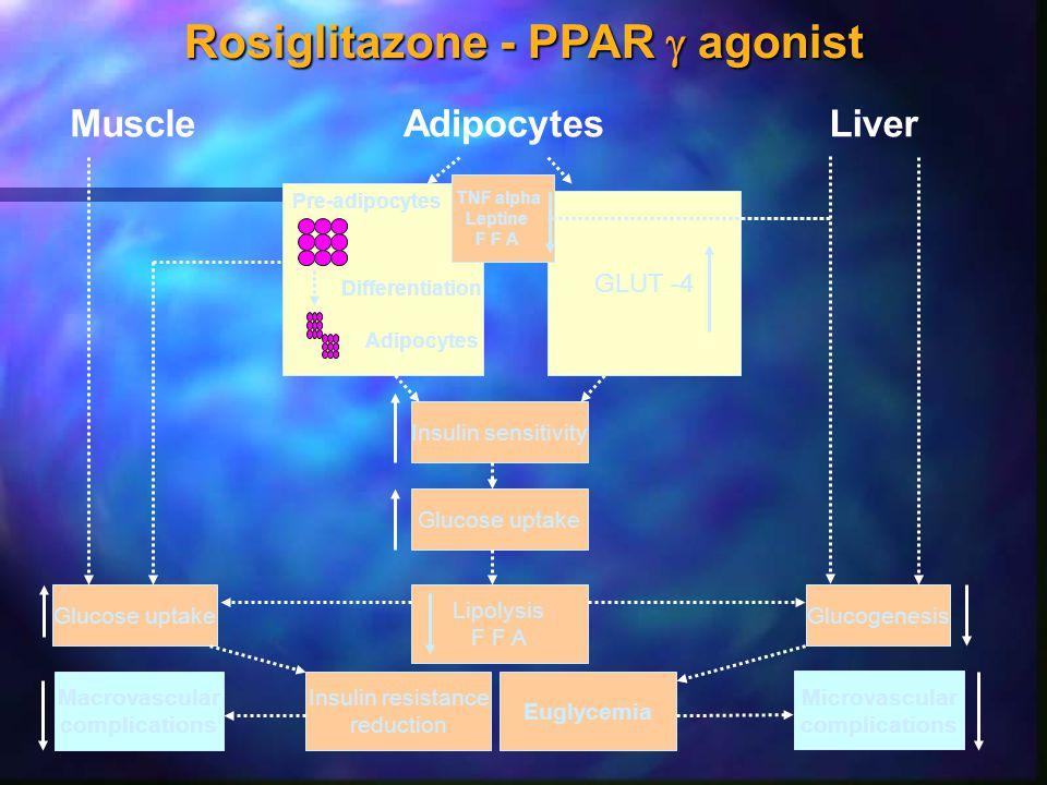 Rosiglitazone - PPAR g agonist