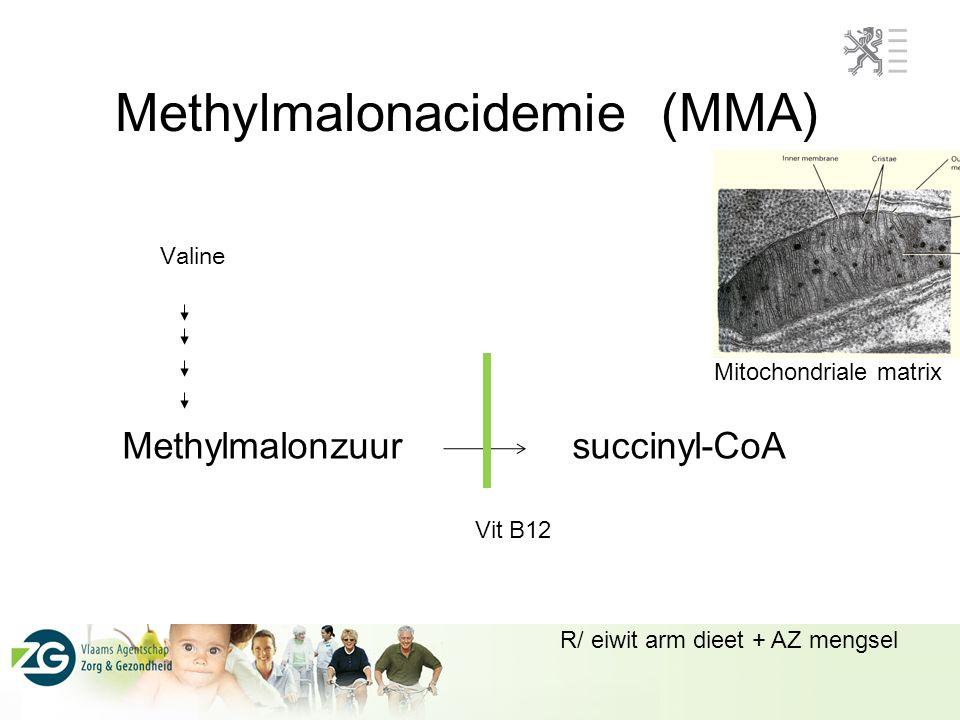 Methylmalonacidemie (MMA)