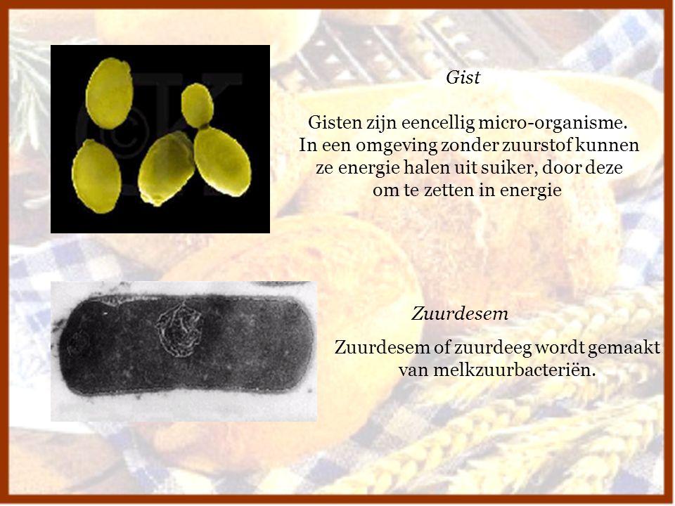 Gisten zijn eencellig micro-organisme.