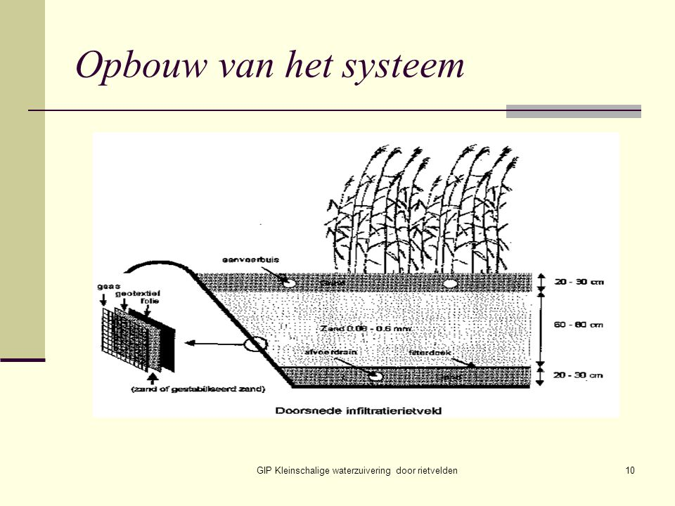 GIP Kleinschalige waterzuivering door rietvelden