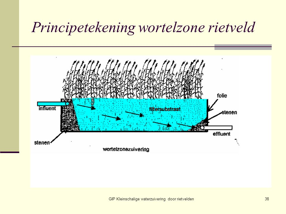 Principetekening wortelzone rietveld