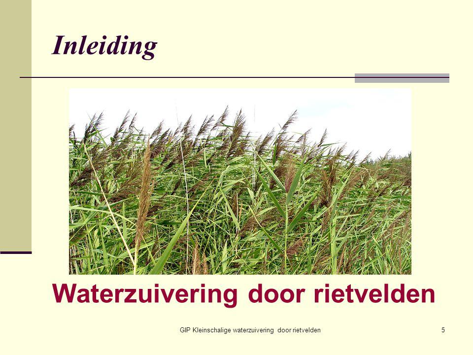 Waterzuivering door rietvelden