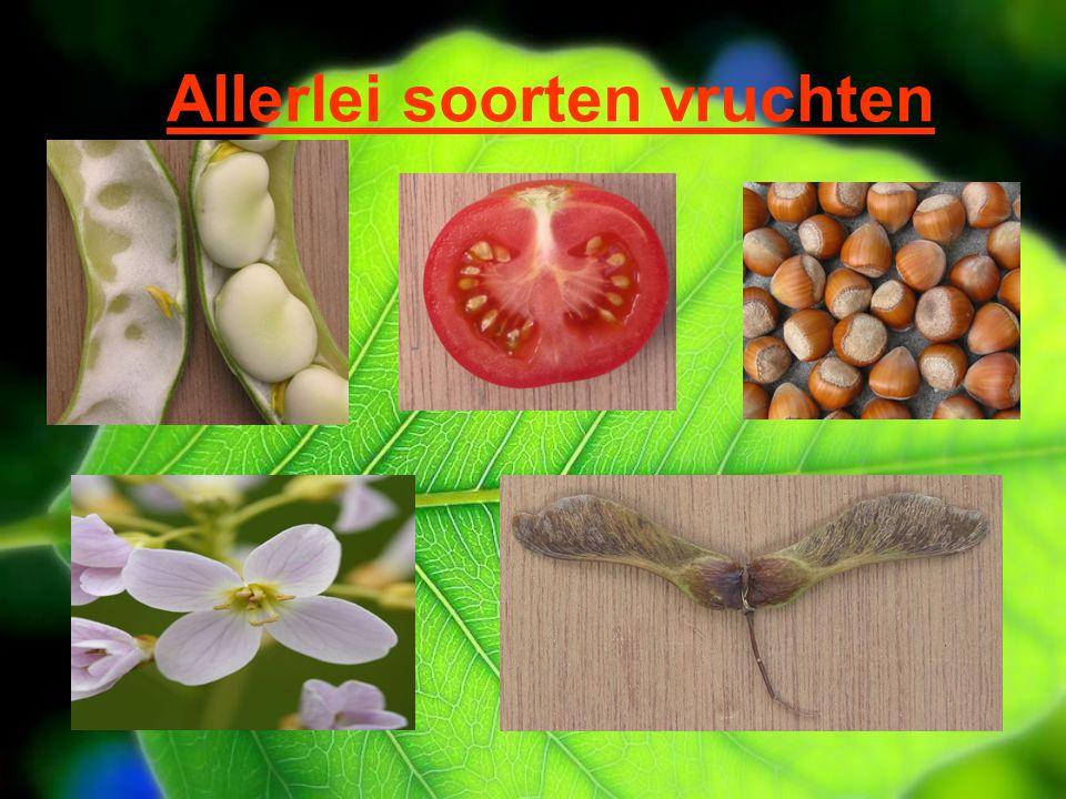 Allerlei soorten vruchten