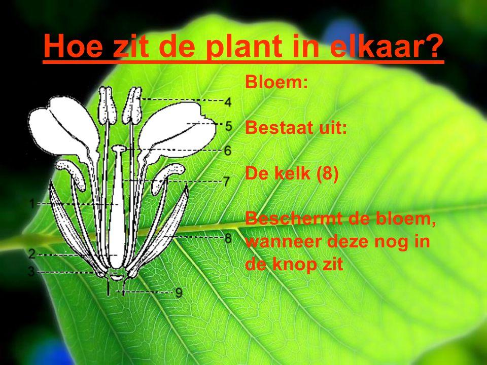 Hoe zit de plant in elkaar