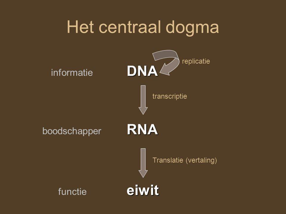 Het centraal dogma DNA RNA eiwit informatie boodschapper functie