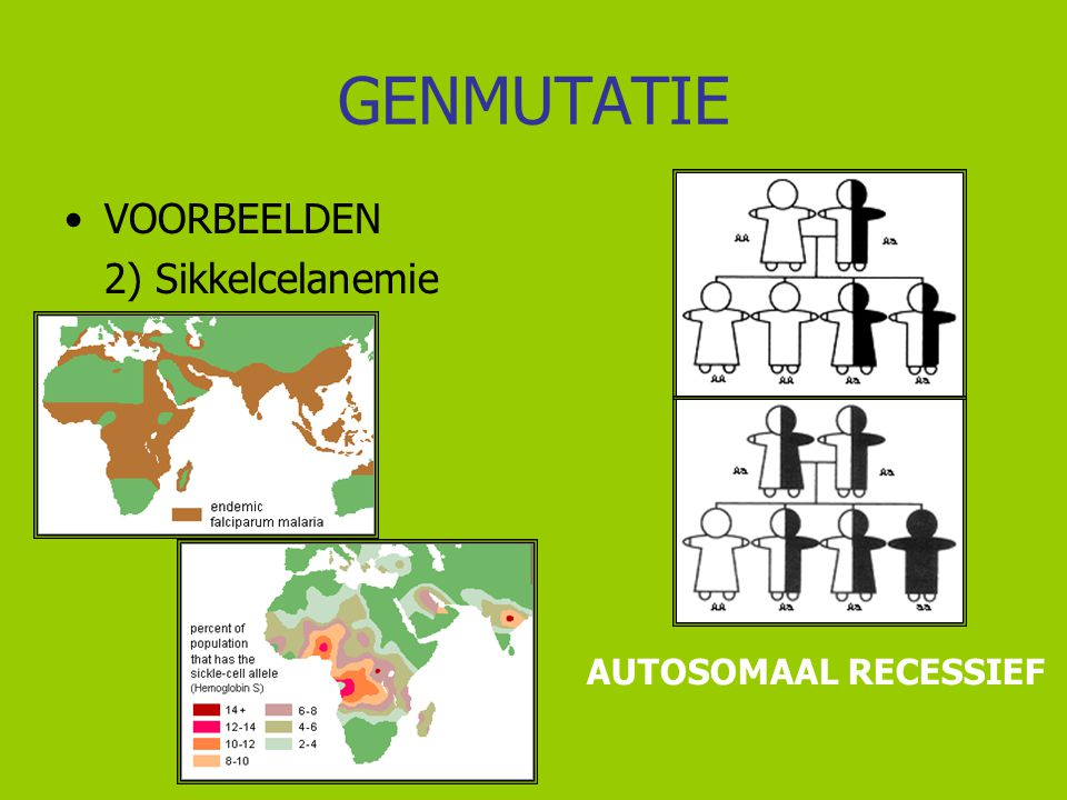 GENMUTATIE VOORBEELDEN 2) Sikkelcelanemie AUTOSOMAAL RECESSIEF
