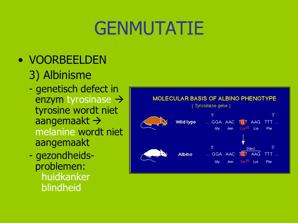 GENMUTATIE VOORBEELDEN 3) Albinisme