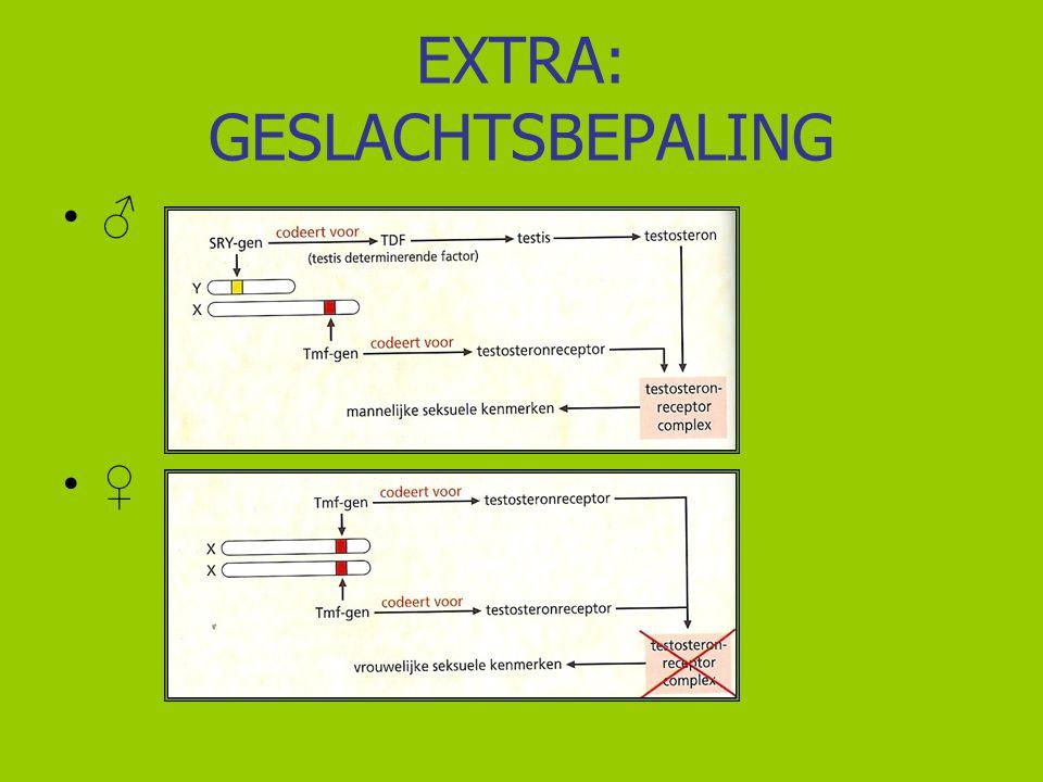 EXTRA: GESLACHTSBEPALING