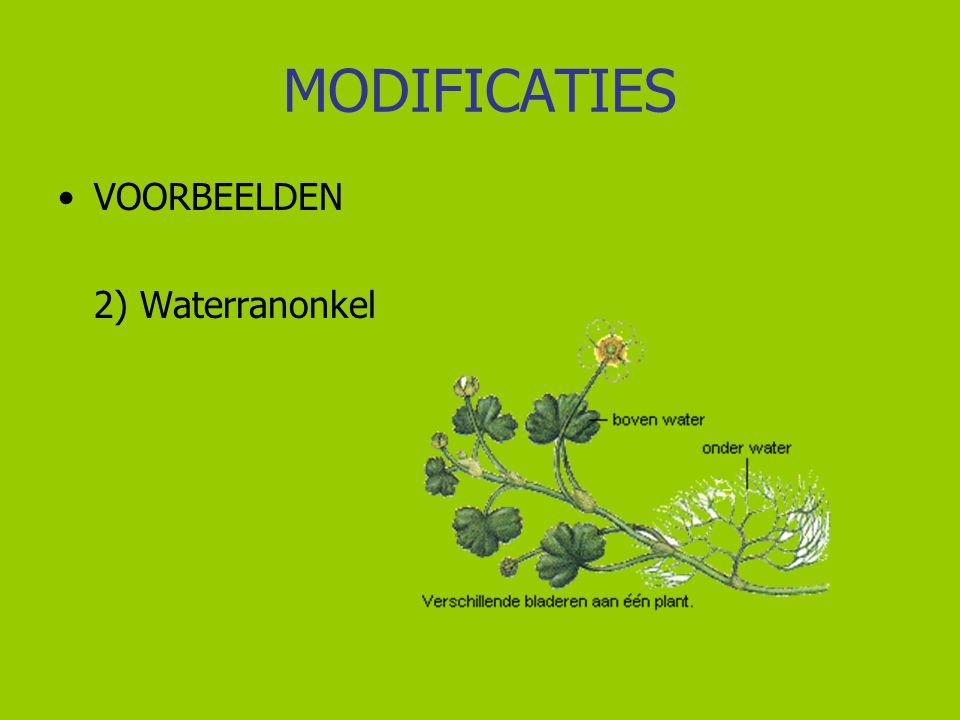 MODIFICATIES VOORBEELDEN 2) Waterranonkel