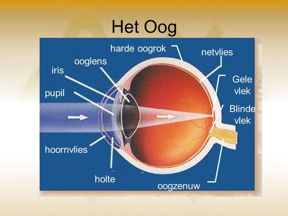 Het Oog harde oogrok netvlies ooglens iris Gele vlek pupil Blinde vlek