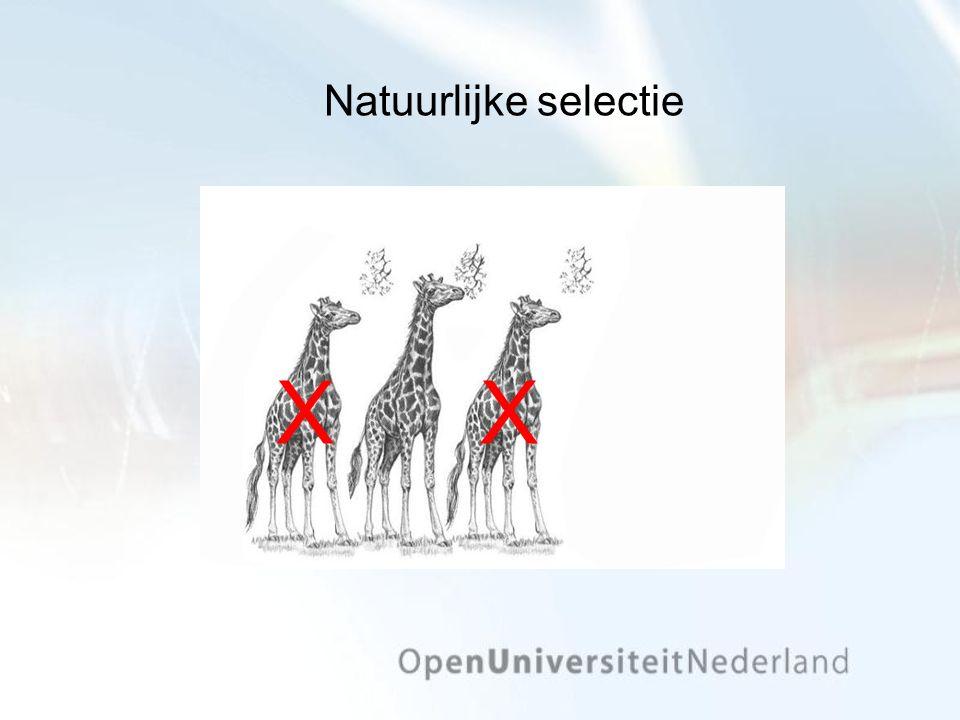 Natuurlijke selectie X X