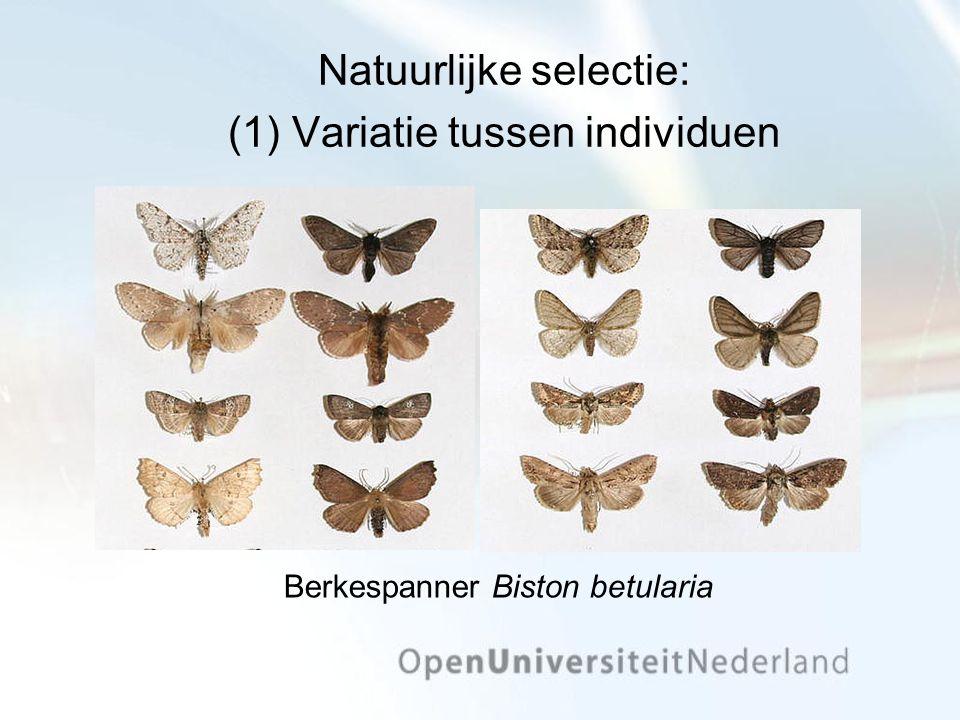 Natuurlijke selectie: (1) Variatie tussen individuen