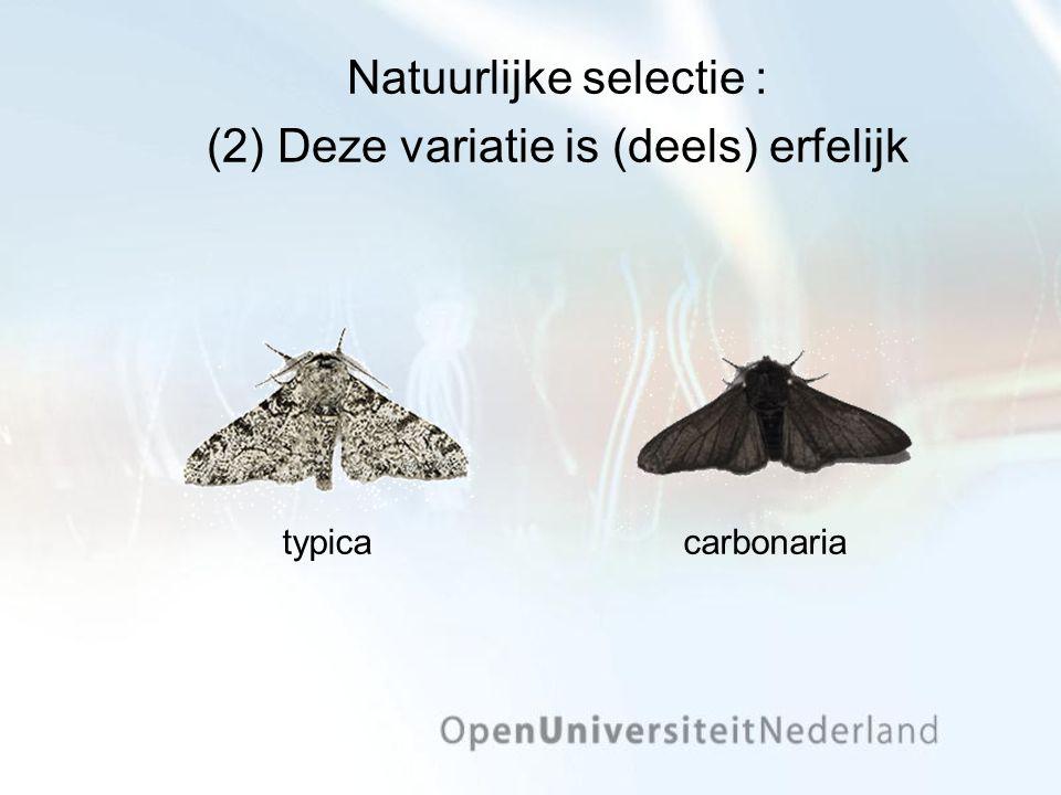 Natuurlijke selectie : (2) Deze variatie is (deels) erfelijk