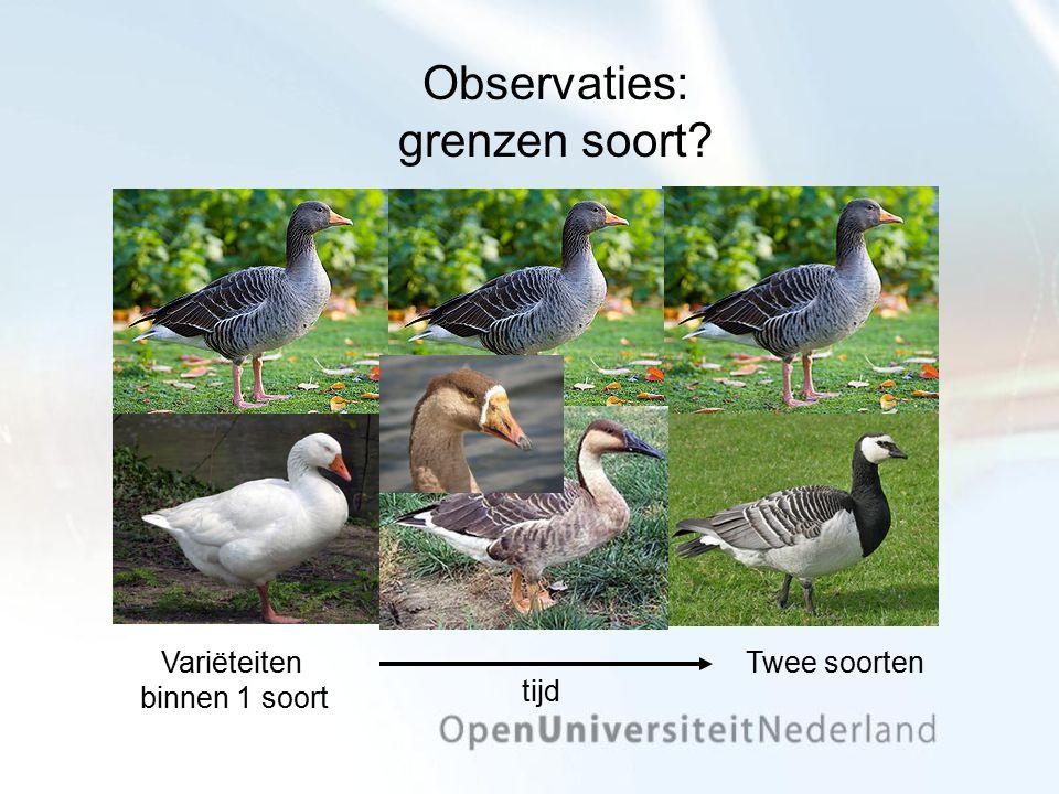 Observaties: grenzen soort