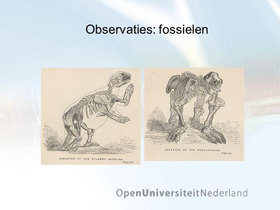 Observaties: fossielen
