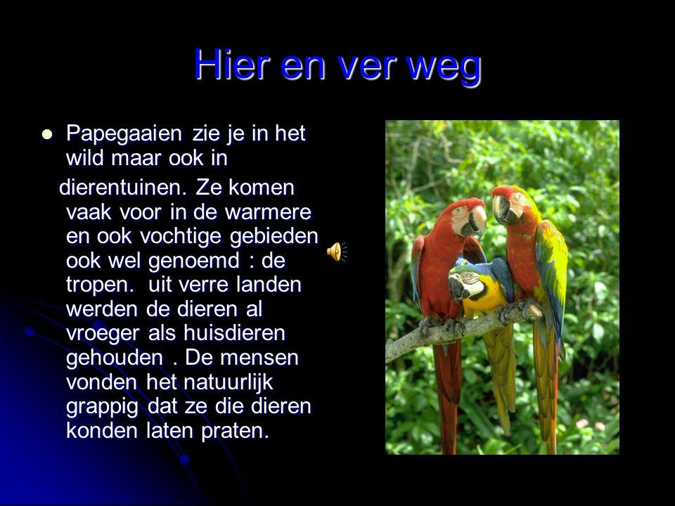 Hier en ver weg Papegaaien zie je in het wild maar ook in