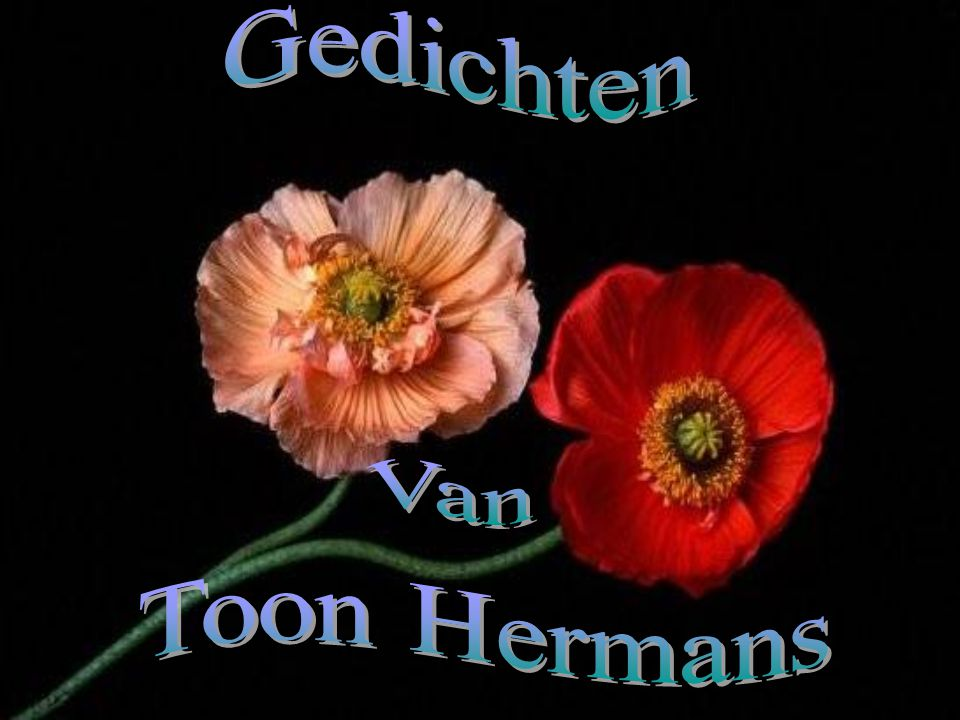 Gedichten Van Toon Hermans Ppt Video Online Download