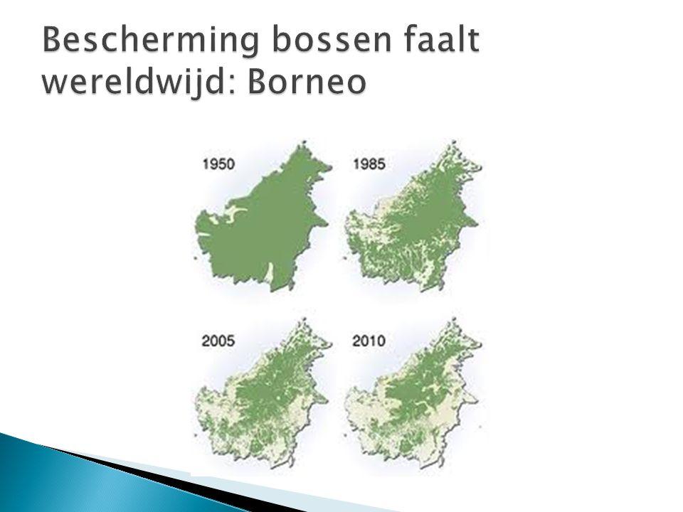 Bescherming bossen faalt wereldwijd: Borneo
