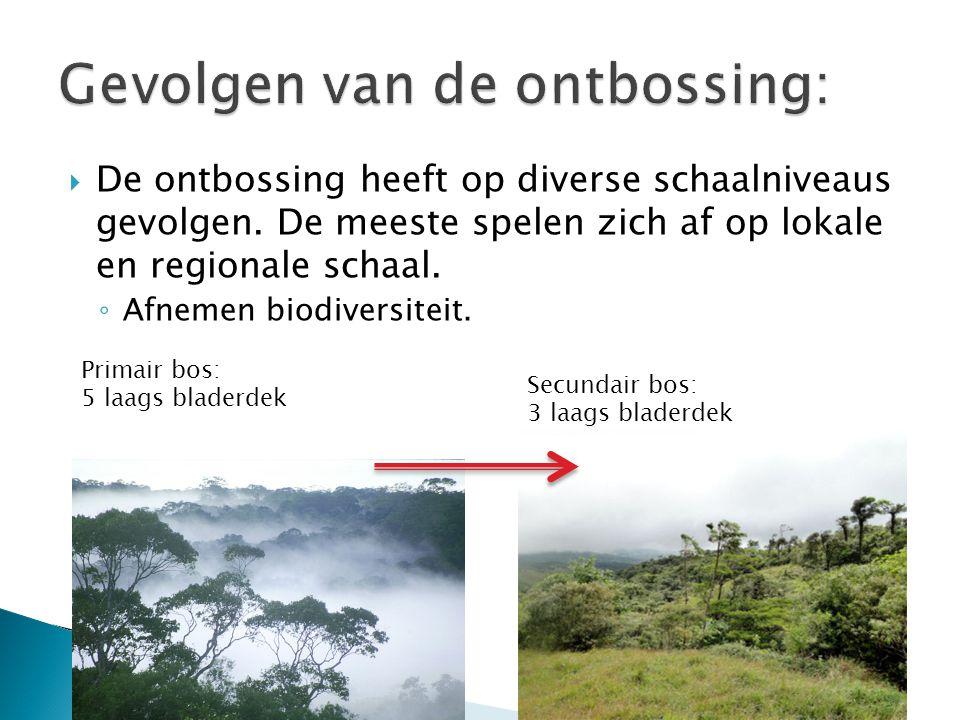 Gevolgen van de ontbossing: