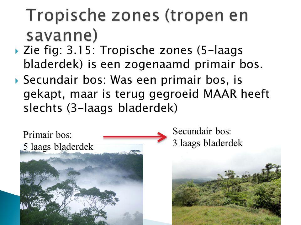 Tropische zones (tropen en savanne)