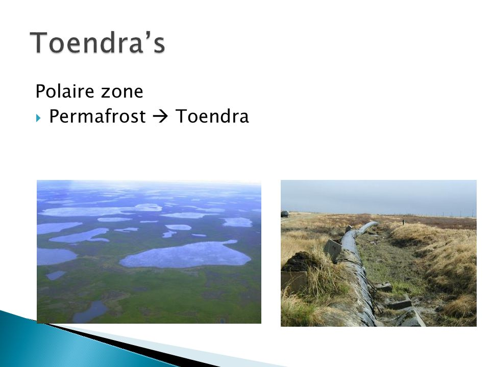 Toendra's Polaire zone Permafrost  Toendra