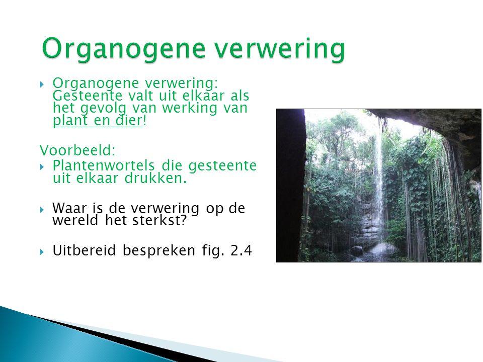 Organogene verwering Organogene verwering: Gesteente valt uit elkaar als het gevolg van werking van plant en dier!
