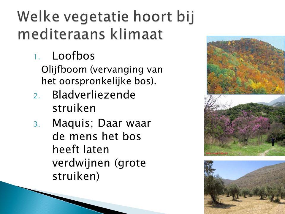 Welke vegetatie hoort bij mediteraans klimaat