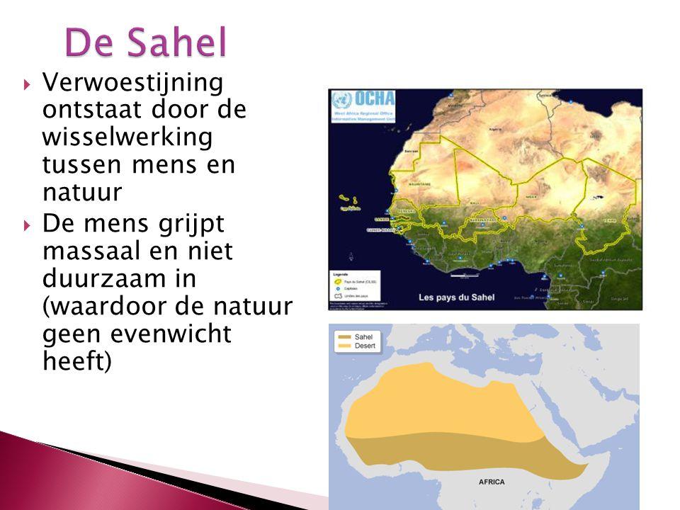 De Sahel Verwoestijning ontstaat door de wisselwerking tussen mens en natuur.
