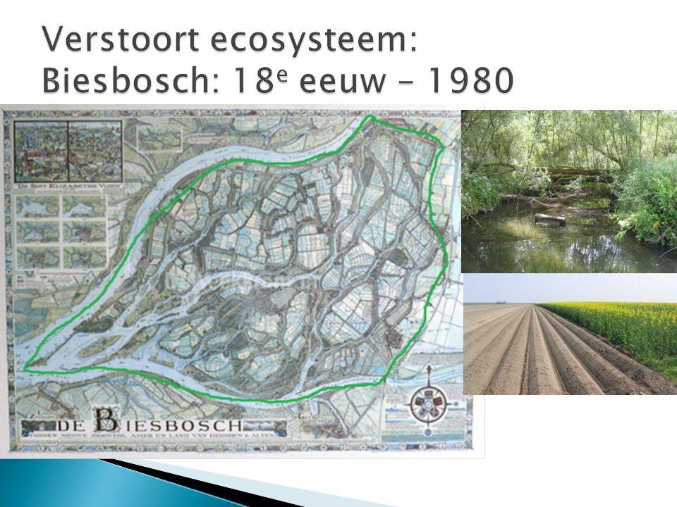 Verstoort ecosysteem: Biesbosch: 18e eeuw – 1980