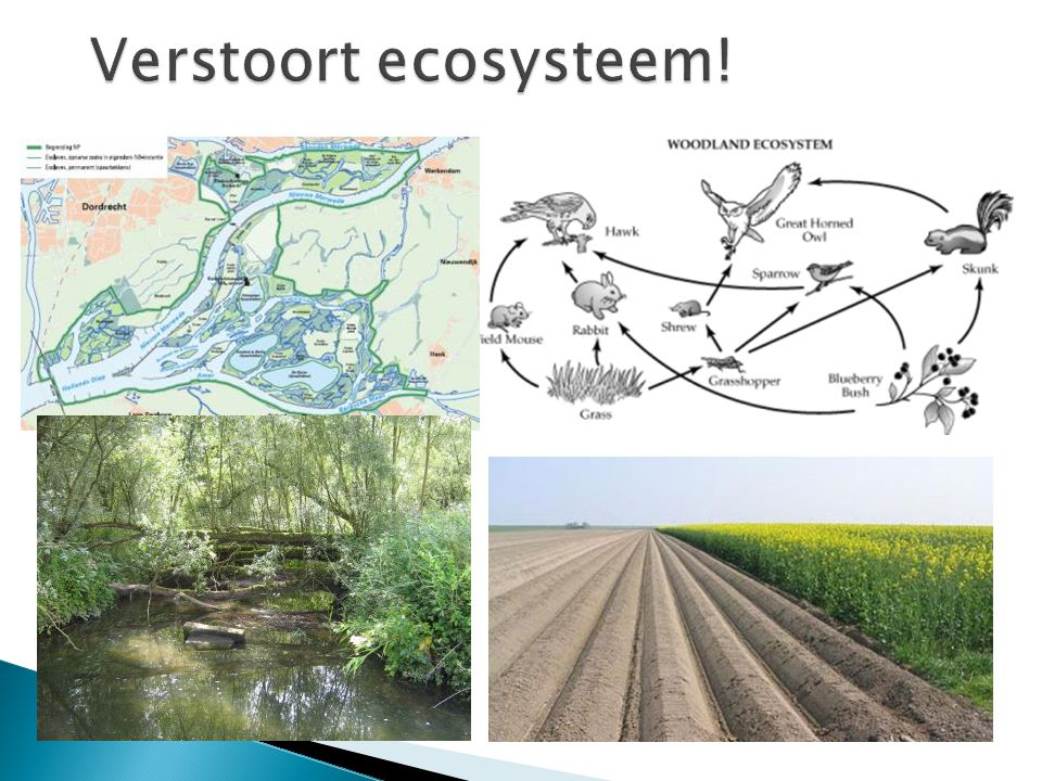 Verstoort ecosysteem!