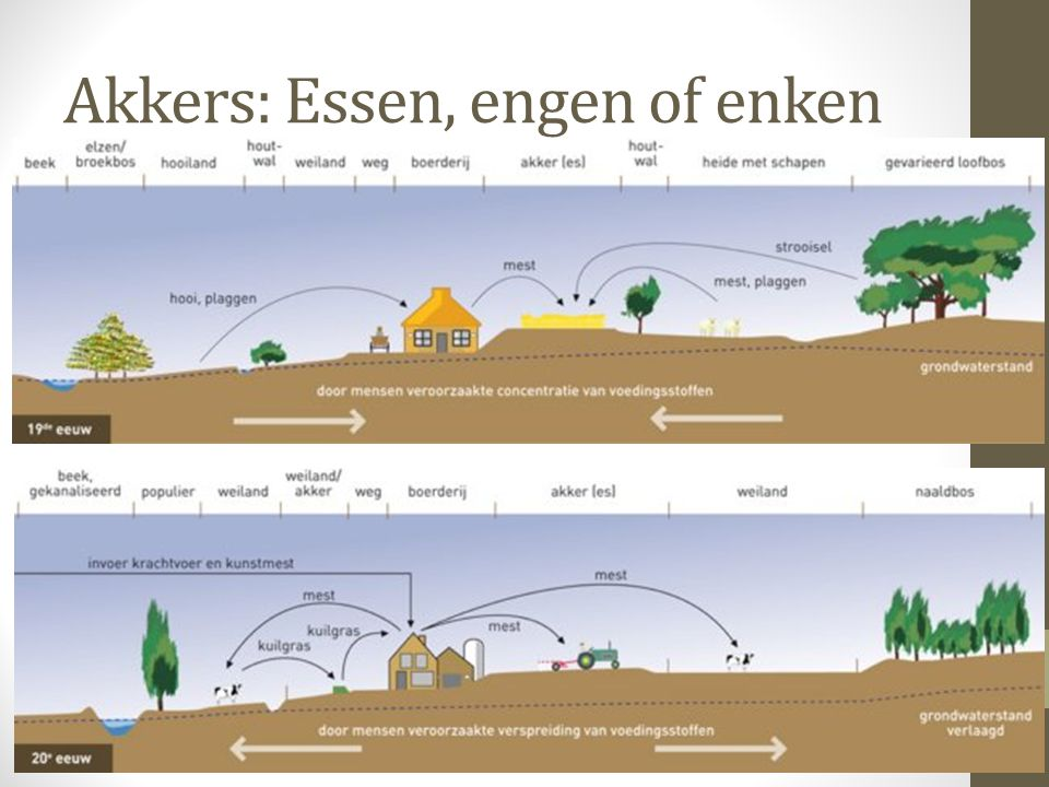 Akkers: Essen, engen of enken