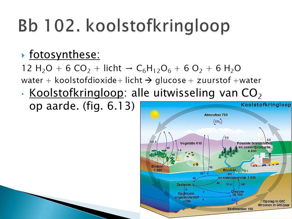Bb 102. koolstofkringloop fotosynthese:
