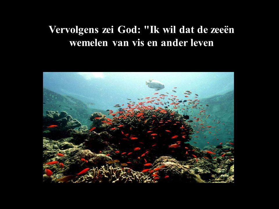 Vervolgens zei God: Ik wil dat de zeeën wemelen van vis en ander leven