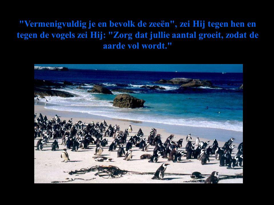Vermenigvuldig je en bevolk de zeeën , zei Hij tegen hen en tegen de vogels zei Hij: Zorg dat jullie aantal groeit, zodat de aarde vol wordt.
