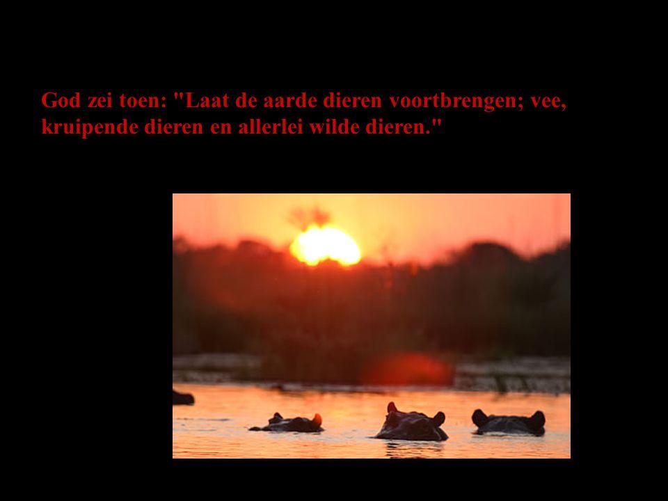 God zei toen: Laat de aarde dieren voortbrengen; vee, kruipende dieren en allerlei wilde dieren.