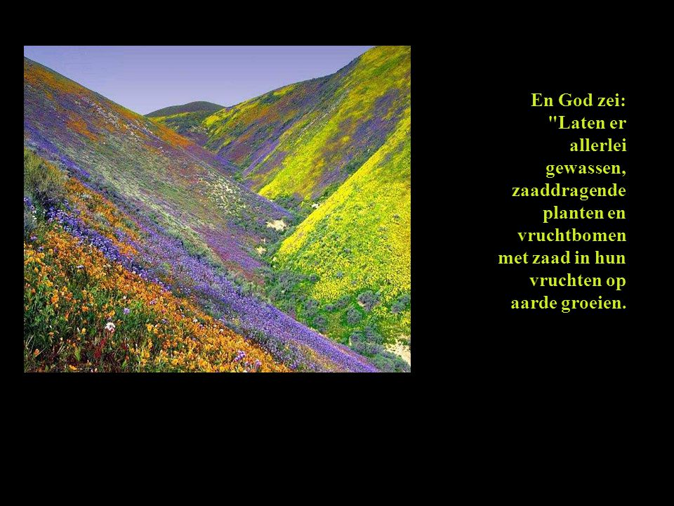 En God zei: Laten er allerlei gewassen, zaaddragende planten en vruchtbomen met zaad in hun vruchten op aarde groeien.