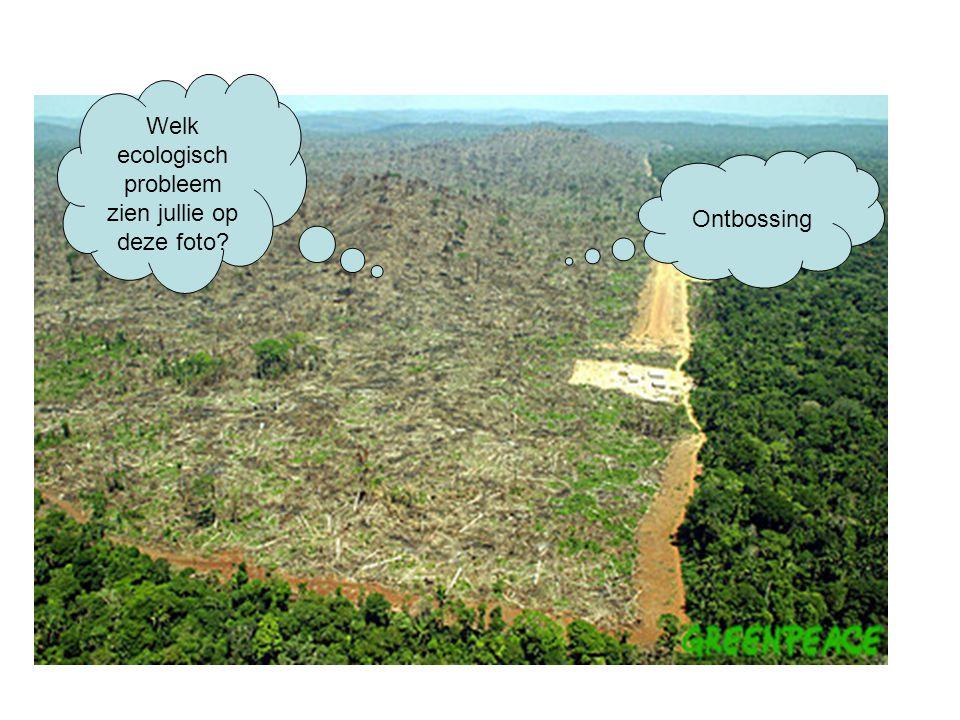 Welk ecologisch probleem zien jullie op deze foto