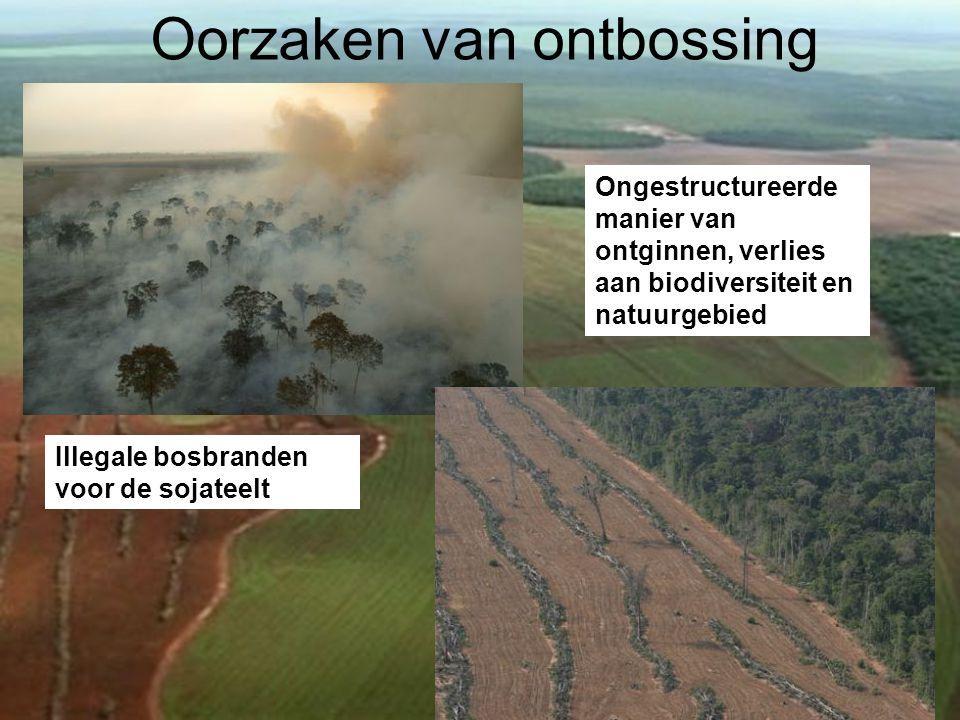 Oorzaken van ontbossing