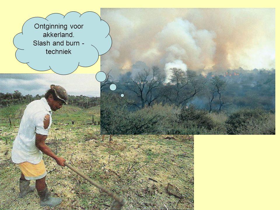Ontginning voor akkerland. Slash and burn - techniek