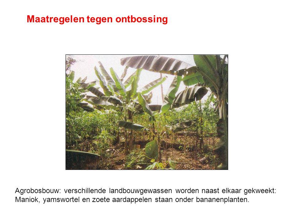 Maatregelen tegen ontbossing
