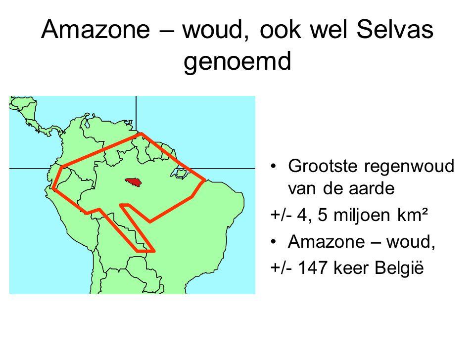 Amazone – woud, ook wel Selvas genoemd