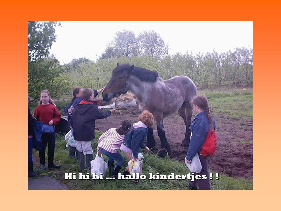 Hi hi hi … hallo kindertjes ! !