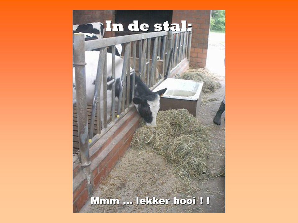 In de stal: Mmm … lekker hooi ! !