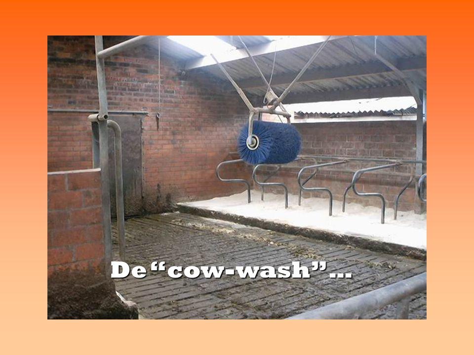 De cow-wash …