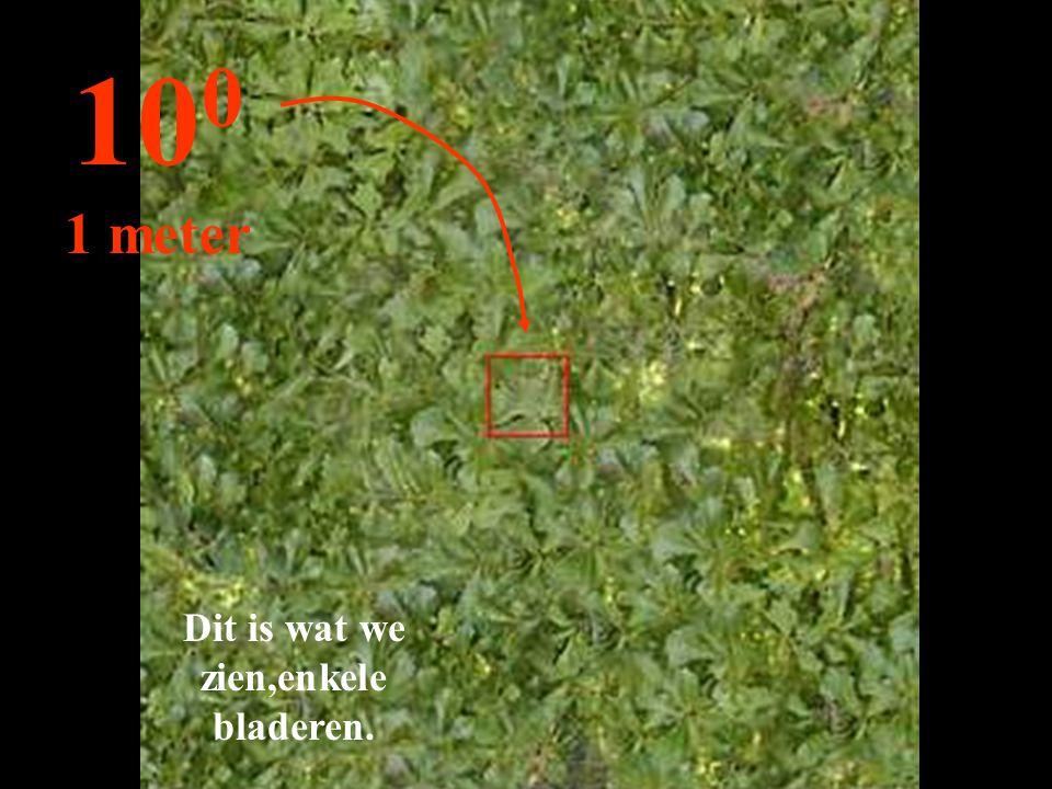 Dit is wat we zien,enkele bladeren.